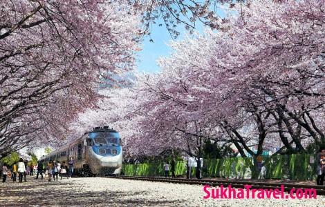 Sukha-travel-tour-du-lich-han-quoc (24)